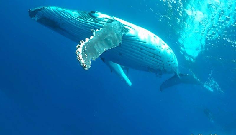 Пение китов