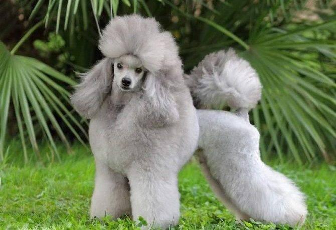 Топ самых умных собак в мире