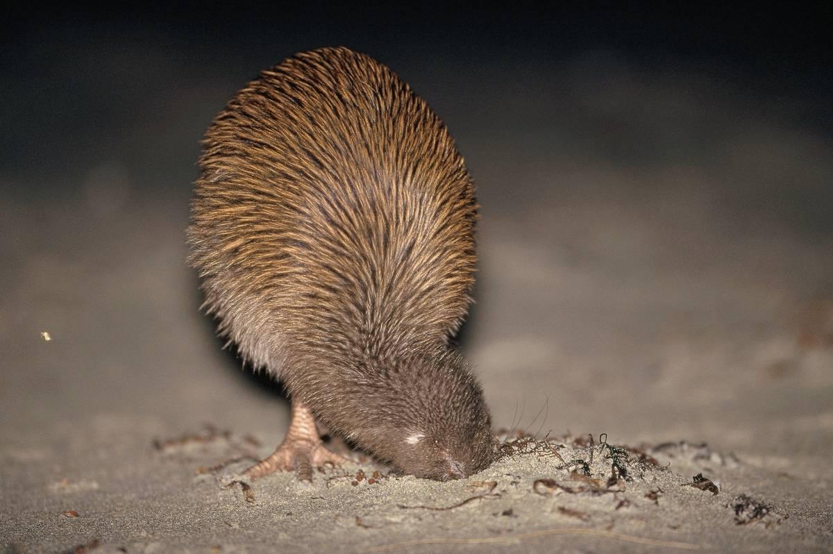 Животный мир австралии фото