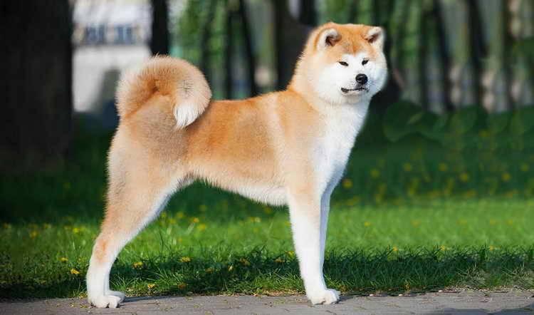 Породы охранных собак с фотографиями и названиями