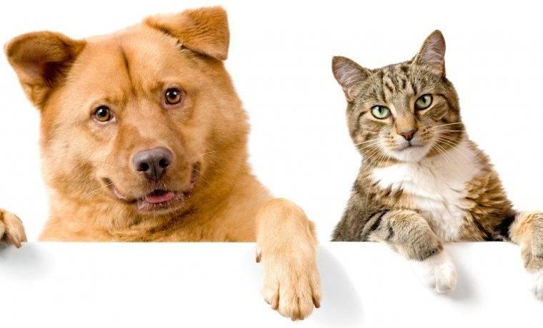 Почему кошки не любят собак