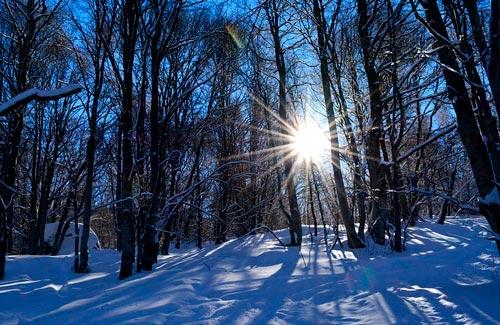 Текст про зимний лес