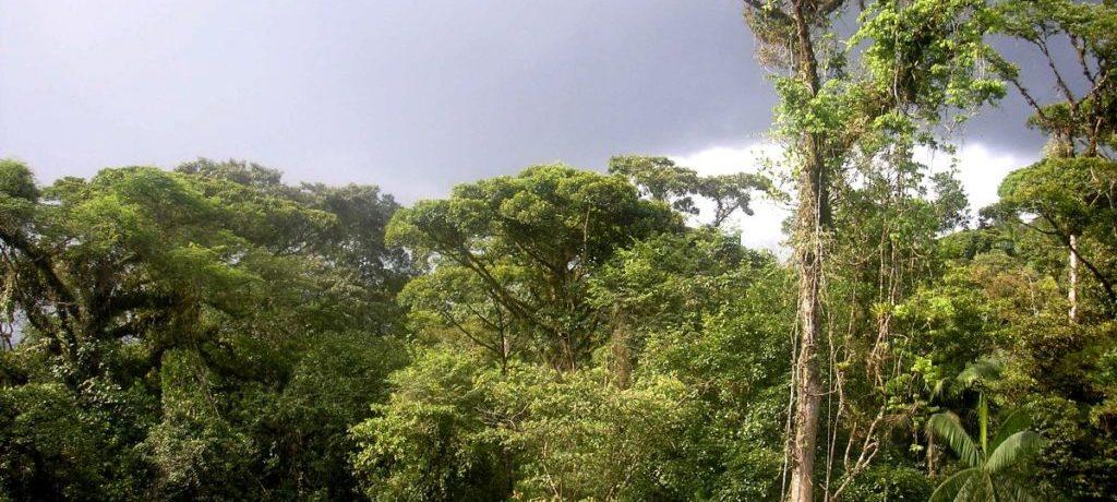Почва влажных экваториальных лесов