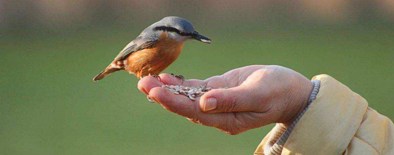 Что кушают птицы