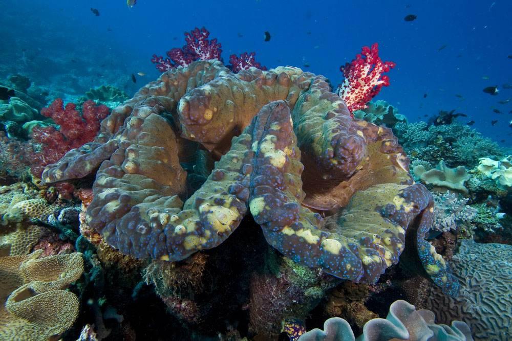 Морские обитатели тихого океана