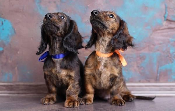 Породы небольших собак с фотографиями и названиями