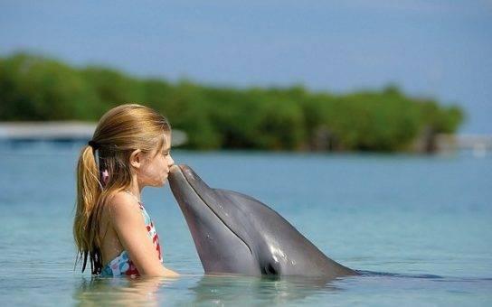 В каком климатическом поясе обитают дельфины