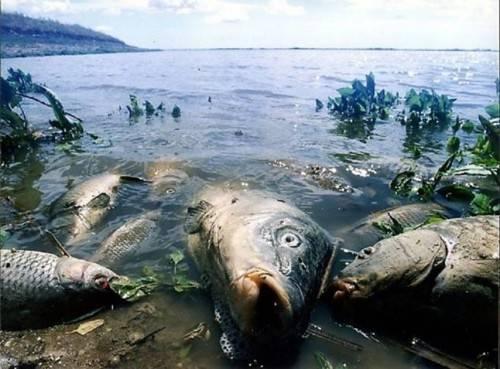 Причины загрязнения воды