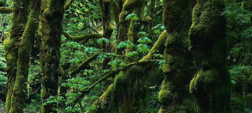 Растительность влажных тропических лесов