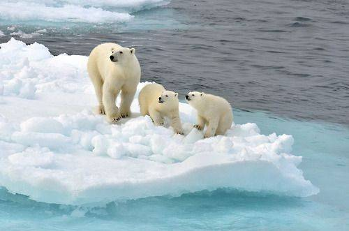 Какую широту имеет северный полюс