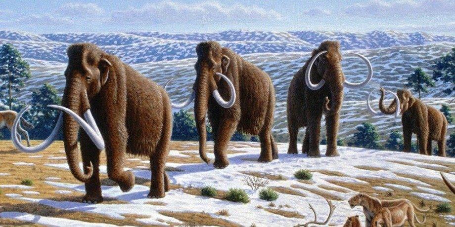 Когда появились мамонты