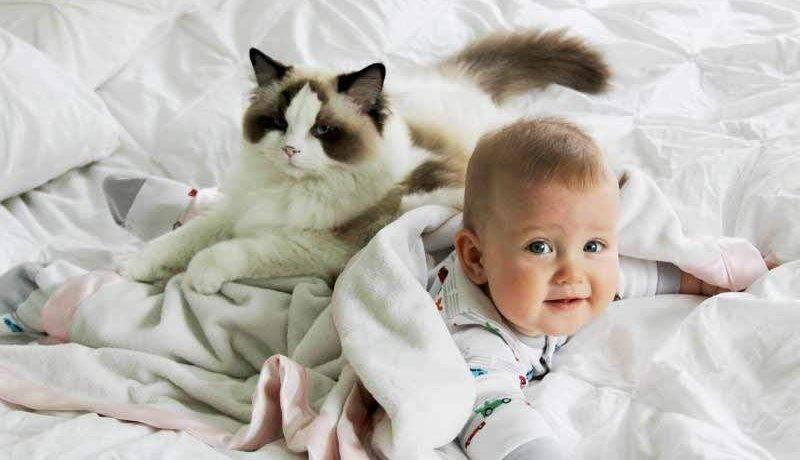 Какая порода кошек подходит для детей