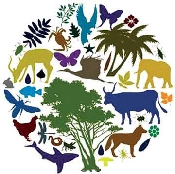 Снижение биологического разнообразия