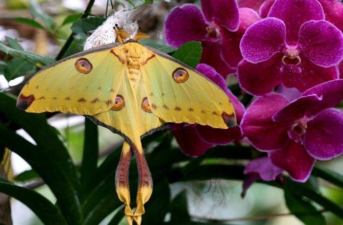 Бабочки мадагаскара