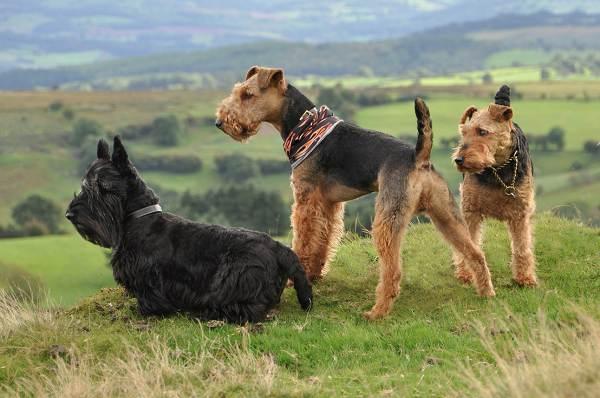 Большие собаки породы название с фото