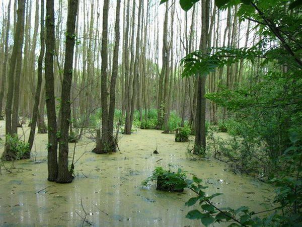 Водные лесные ресурсы и возможности их использования