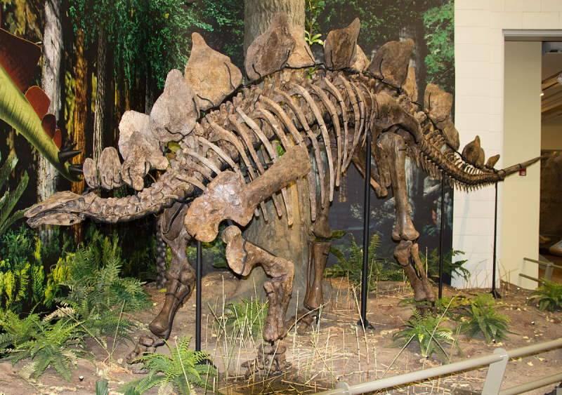 Названия динозавров с картинками список