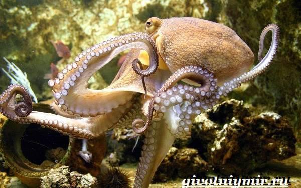 Как передвигается осьминог