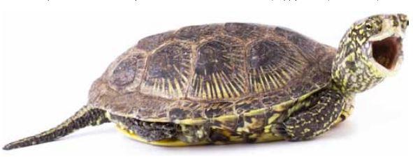 Скорость черепахи в минуту