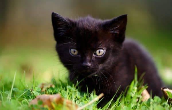 Имя для черного котенка мальчика