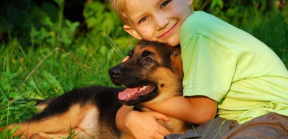 Самая продаваемая порода собак в россии