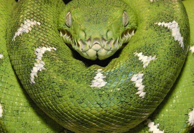 Титанобоа вымерший вид змей фото