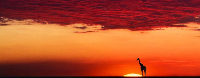 Скорость жирафа при беге
