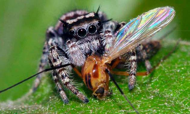 Чем как правило питаются пауки
