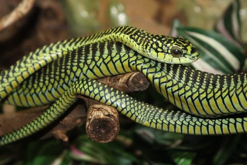 Африканские змеи фото
