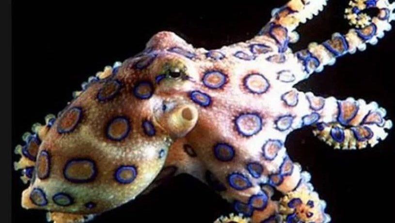 Сообщение о моллюсках по биологии