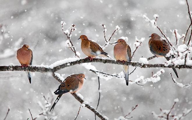 Птицы которые не улетают на юг