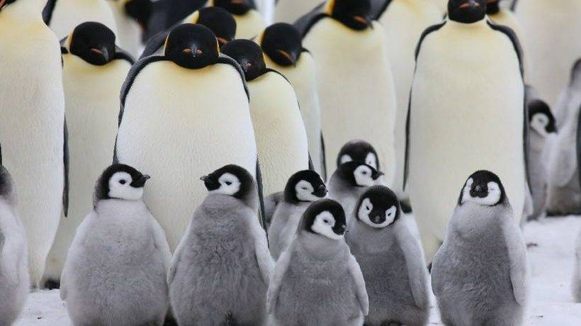 Где обитают пингвины на карте