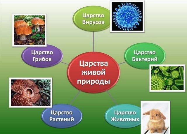 Какие есть царства в биологии