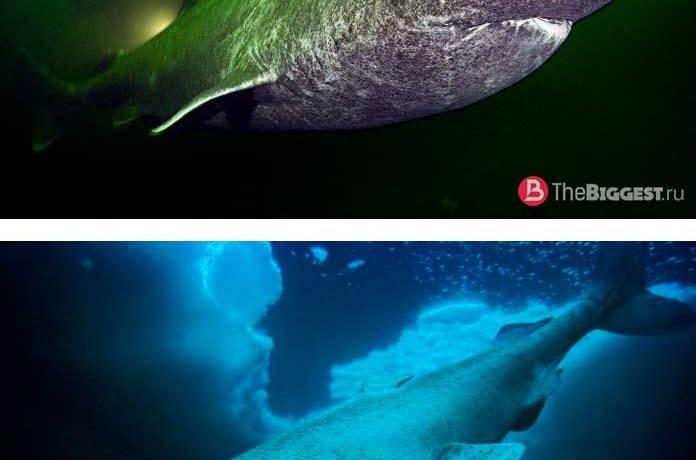 Топ 10 акул