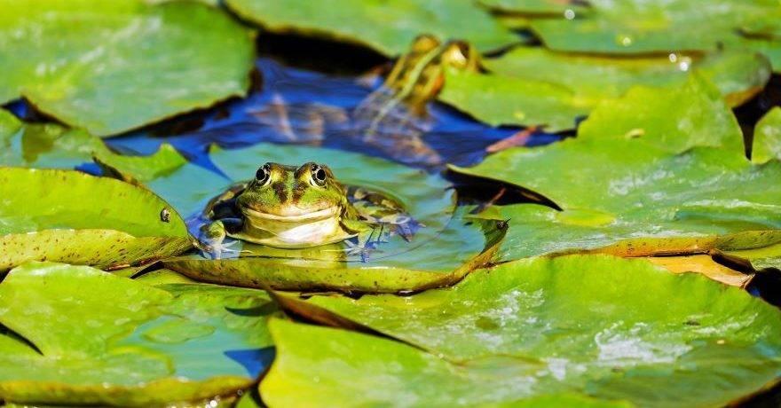 Лягушонок фото