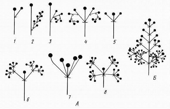 Процессы происходящие в цветке