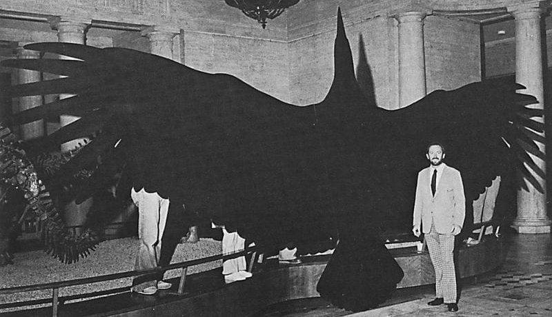 Какая птица самая большая в мире