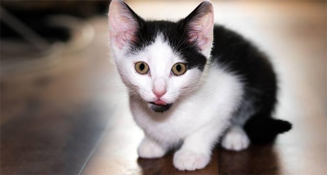 Имя для чёрно белого кота