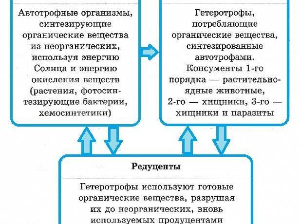 Экосистема это в биологии
