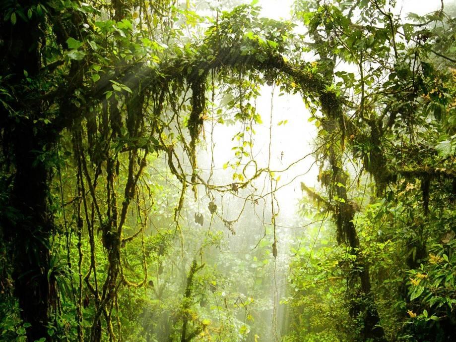 Кто обитает в джунглях