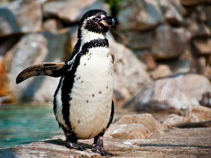 Где обитают пингвины и белые медведи