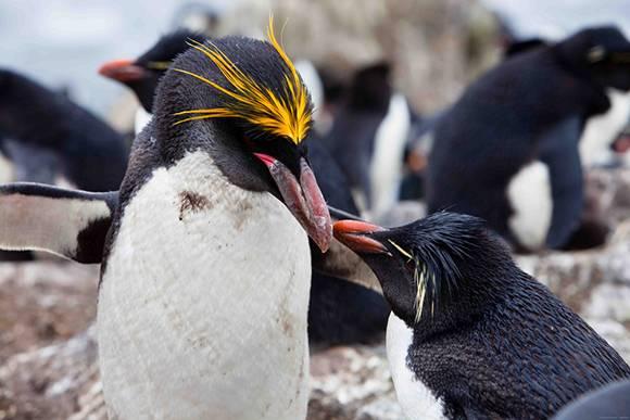 Где живут пингвины и белые медведи