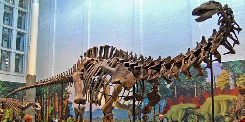 Текст про динозавров