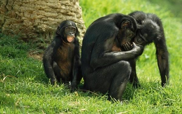 Приматы фото и название