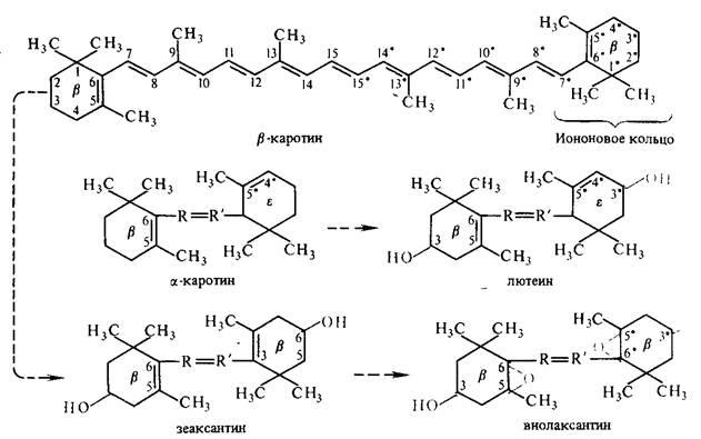 Роль пигментов в процессе фотосинтеза