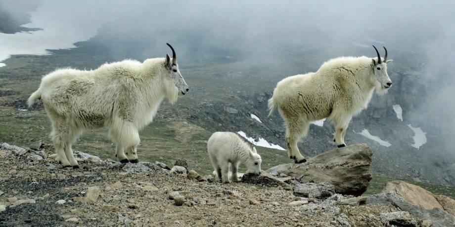 Животные горных областей