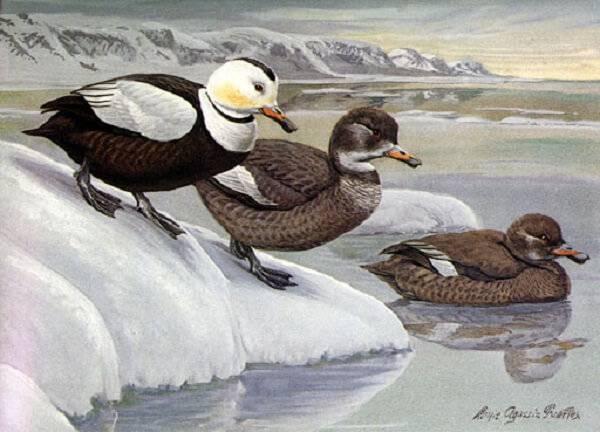 Вымершие виды птиц
