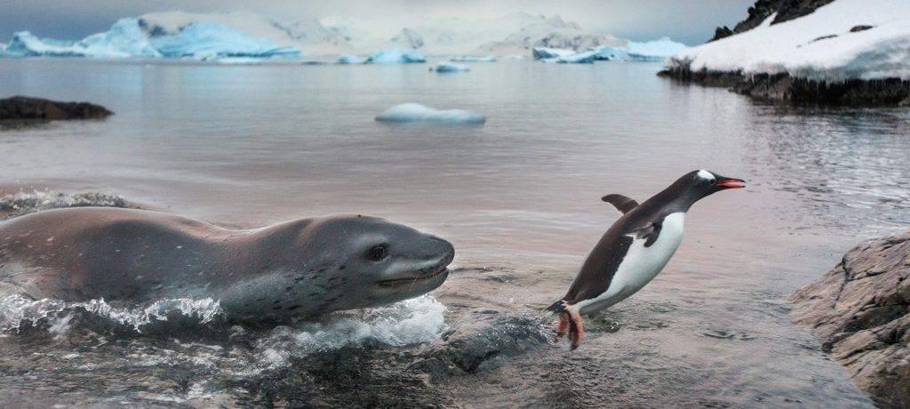 Где обитает морской леопард