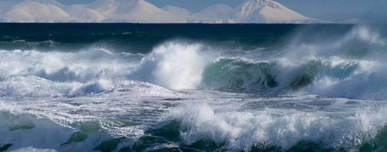 Тварини тихого океану