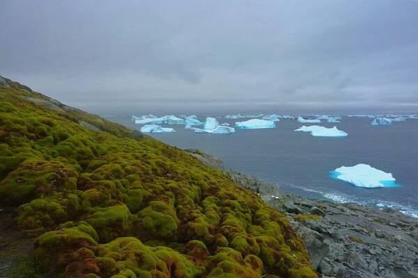 Какие растения обитают в антарктиды список